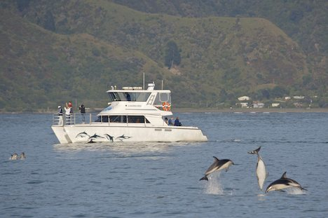 dolphin-watching-boat_303