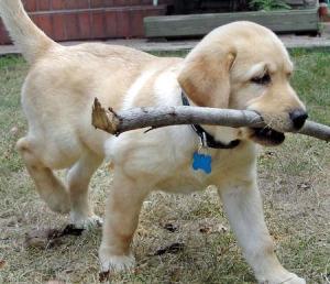 pet-dog-juiny-09