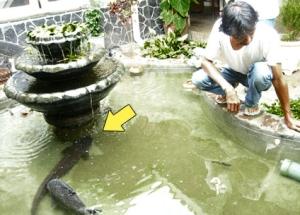 lele di kolam